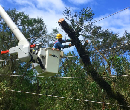 A PRECO lineman works to remove a tree limb from power lines