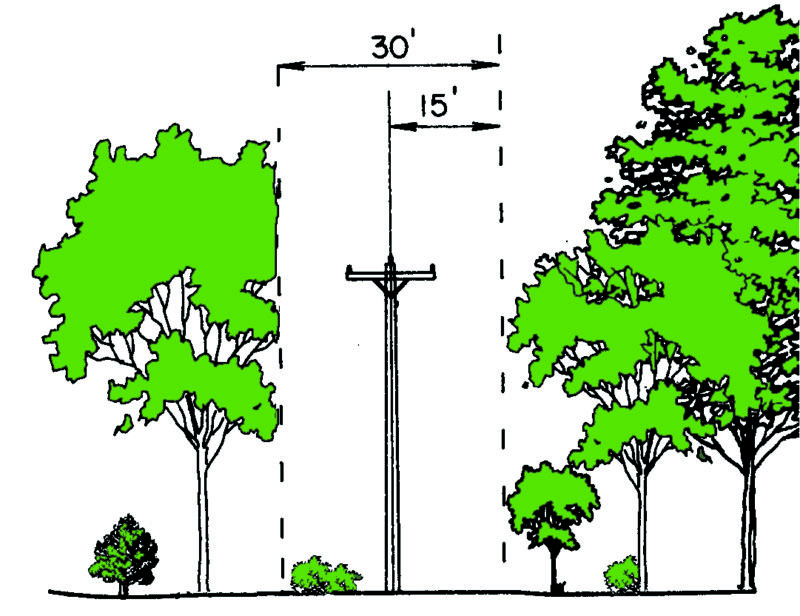 Trees and limbs must be trimmed or removed within 15 feet of power lines