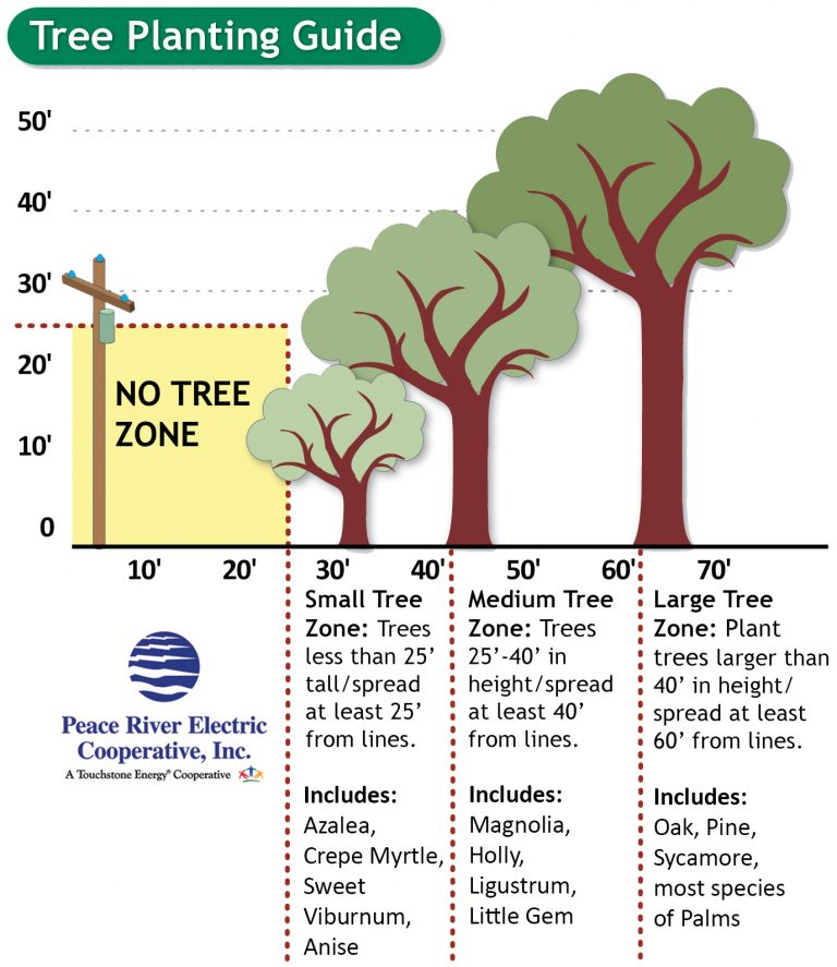 Illustration detailing height of trees to be planted in each zone of distance away from overhead power lines